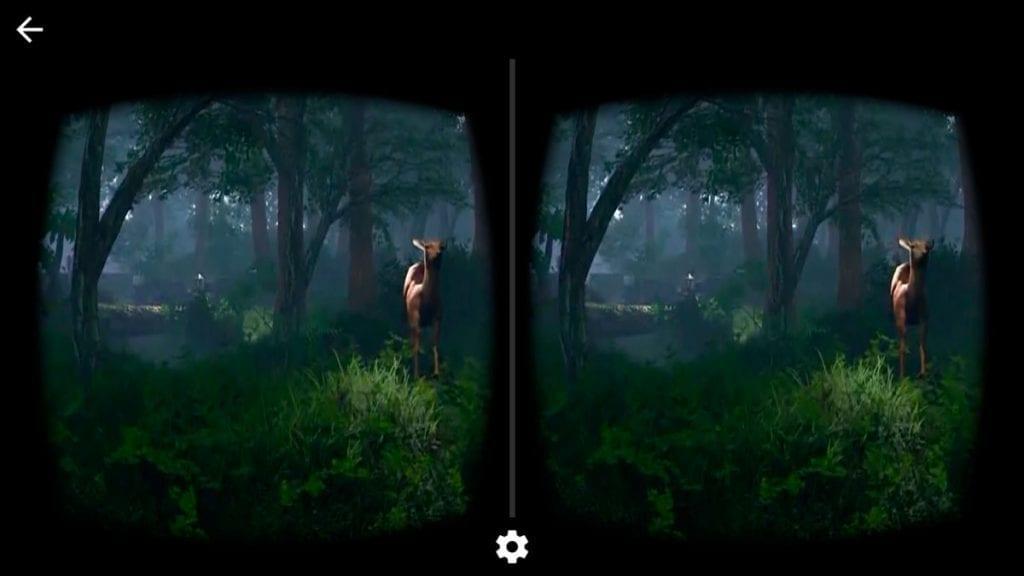 immagini di bosco con animale