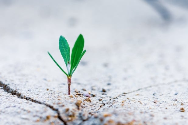 pianta che cresce in mezzo al terreno
