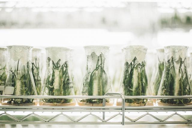 piante in laboratorio